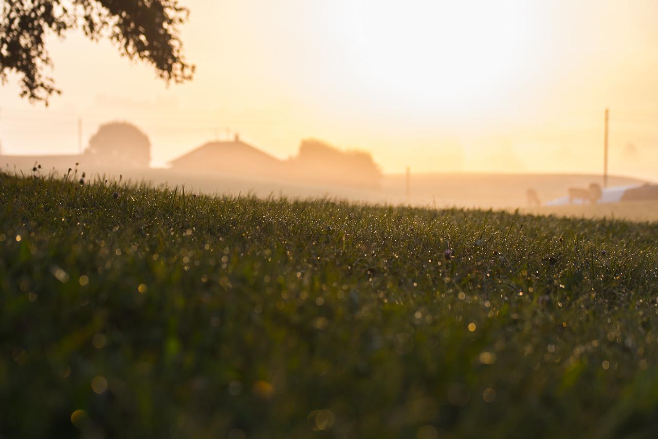 Obrót ziemią rolną – kto może nabyć działkę rolną?